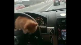 cute adorable cats