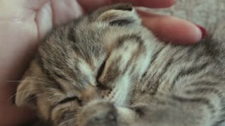 Baby Cat Sleeping affection