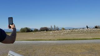 Flock of Birds 🐦🐦🐦