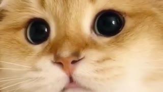 a cute kitten shows interest