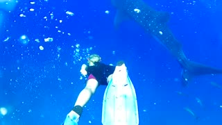 Women swimming with a very dangerous shark in the ocean