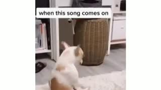 Dog dances to favorite music each time its played