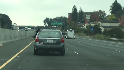 Long Dread Locks Hanging Out Of The Window On The Freeway!