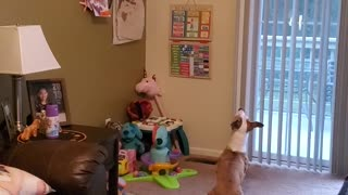 Just a Dog & a Balloon