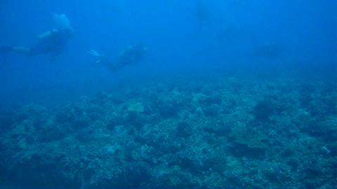 Sullivan's Reef