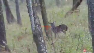 Deer season 2020