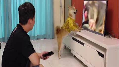 funny dog watch TV