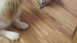 Parrot Teases Pouting Pooch