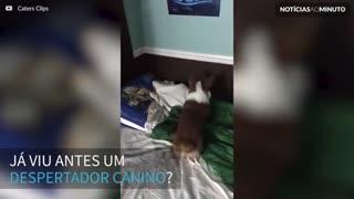 Criança tem um despertador diferente: um cão