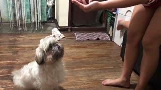 Dog Scarfs Down Imaginary Treats