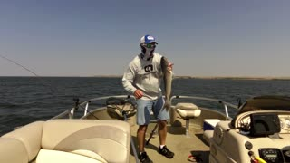 Walleye catfish double.