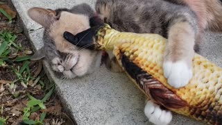Cat Enjoys a Face Massage from Stuffed Fish Toy