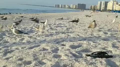 Feeding the Seagulls!