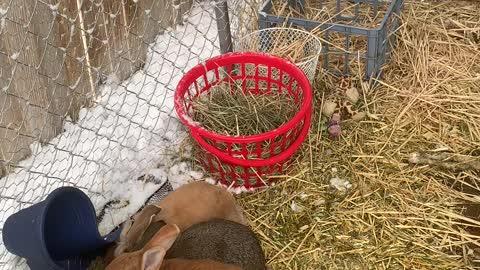 Bunny colony Colorado