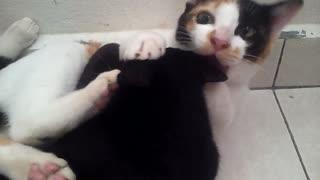 Obsessive cat won't stop licking best friend