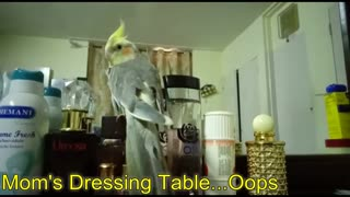 The parrot that thinks it's human