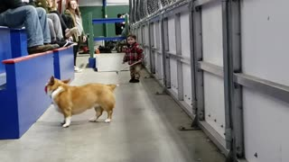 Dog and Boy Duo Make Perfect Playtime Pals