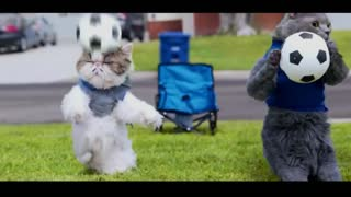 Cat soccer