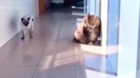 Outstanding move by the cat 😺😺🐈🐈
