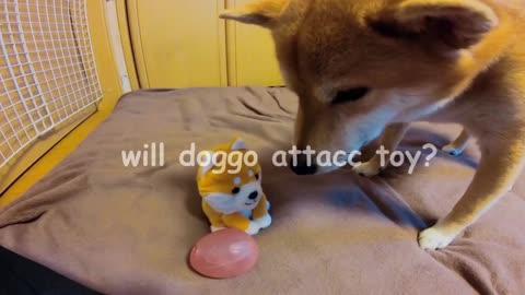 Toy triggers doggo?