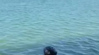 Wake board guy pulled into water fail