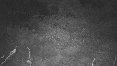 Funny Doe Spots Camera and Hits Reverse