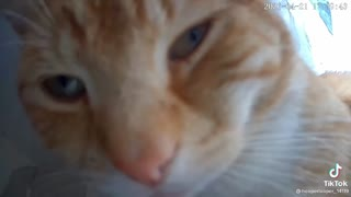 MUST WATCH THESE CATS BEING FUNNY!!