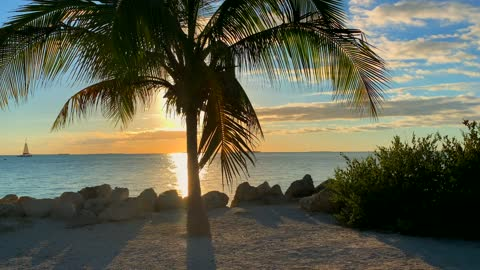 The Beauty of Sunset, Palm Trees and Nature