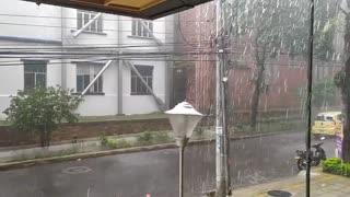 Un árbol se cayó este sábado durante las fuertes lluvias en Bucaramanga
