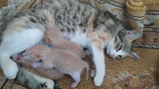 Beautiful cats with her mother