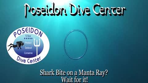 Shark Bite on a Manta Ray?