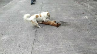 Dog Tries to Wake Best Friend
