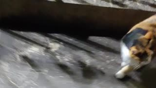 To walk with a cat