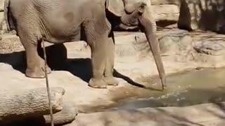 Elephant Enjoying Some Ice