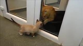 Este gatito salvado justo a tiempo de un triste destino ahora sabe cómo consolar a otros como él