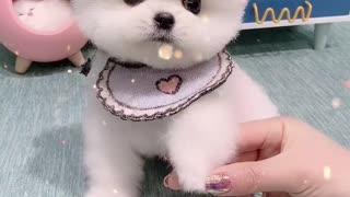 little lovely dog 3