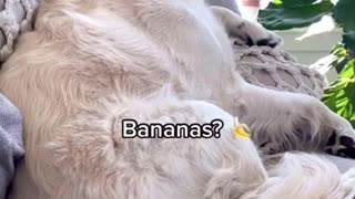 """Sleeping dog wakes up to the word """" chicken"""""""