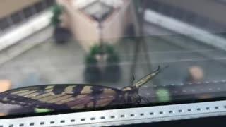 Butterfly on office window