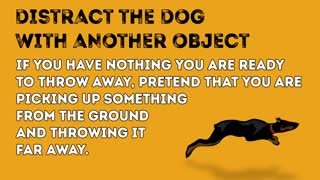 How to Survive a Dog Attack !!!