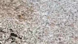 Reservoir Filled with Floating Fish