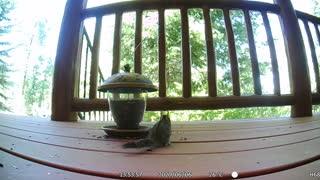 Chipmunk Eating on Deck!