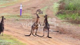 kangaro fun with family