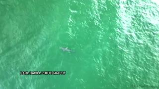 Hammerhead shark spotted off Florida's coast