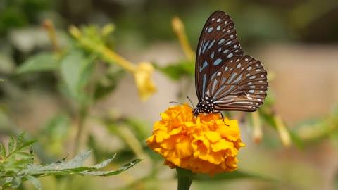 Wonderful beautiful butterfly on flower