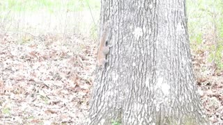 """Little """"Callie"""" learning to hunt squirrels."""