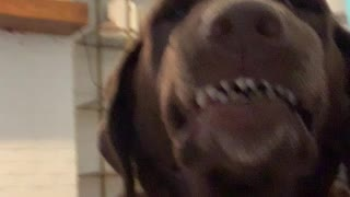 Silly dog delivers goofy smile