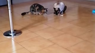 funny cat won't share his food