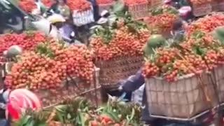 Vietnamese fruit trees