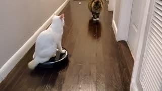 Funny cat video, Qtip