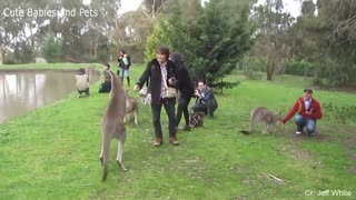 Funny Animals Running After People!😂